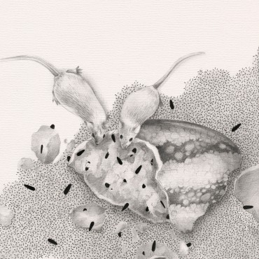 5 ratas testean una sandia